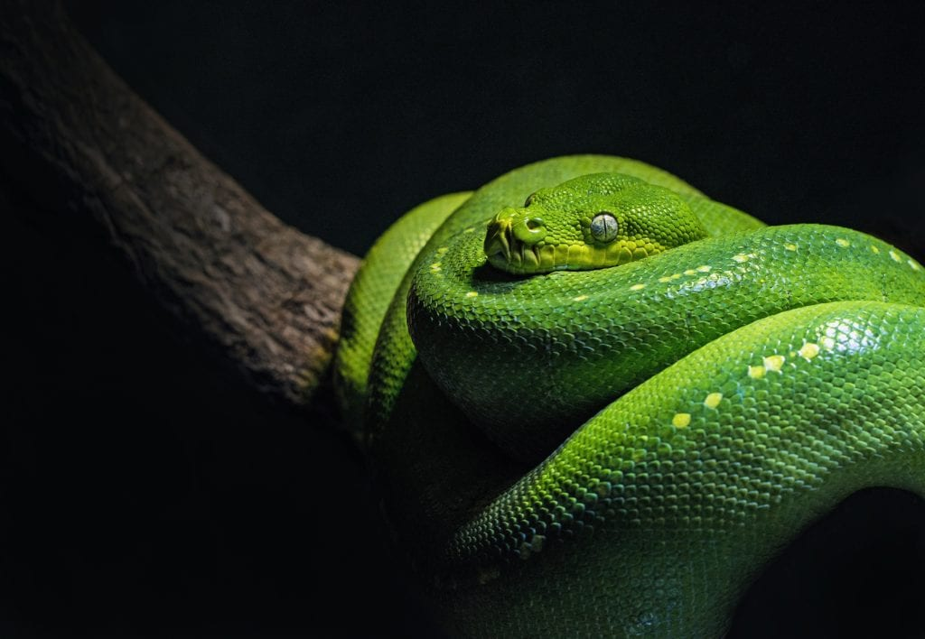 Myths About Snake: Things You Need To Know