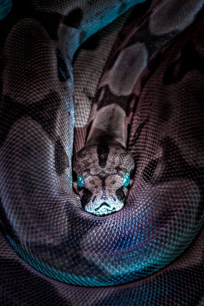 Black Mamba And The Other Deadly Snakes Of Africa