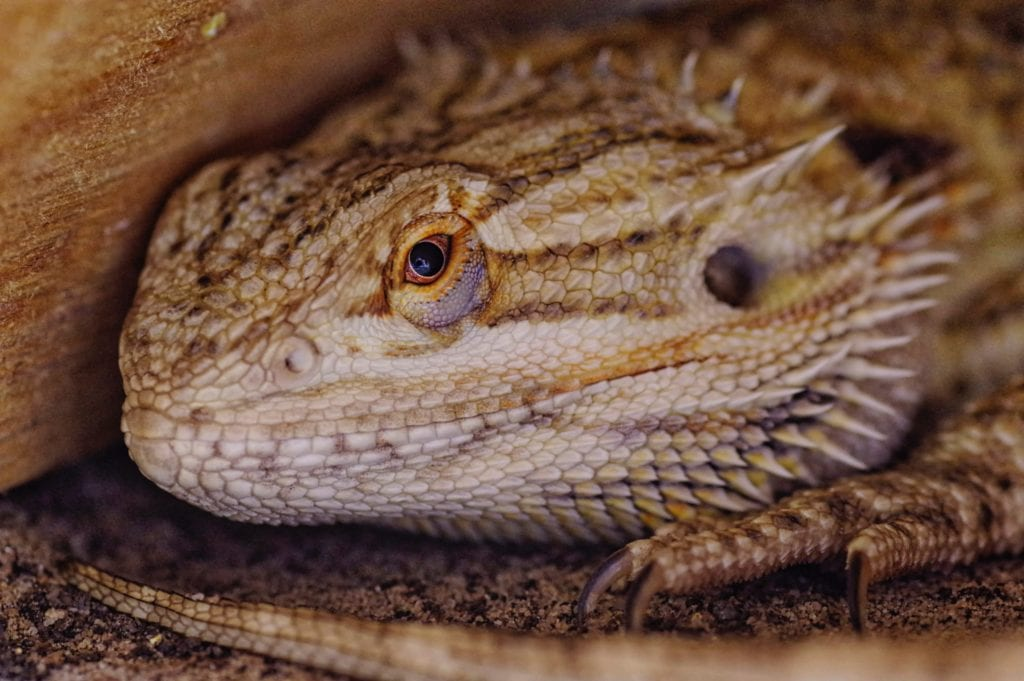 Reptile Pets Maintenance: Tips And Tricks For You